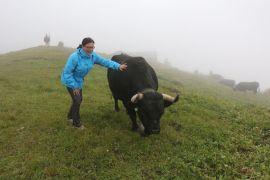 Besuch bei den Eringer Kühen