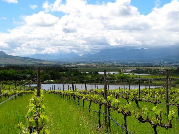 Backsberg Winery