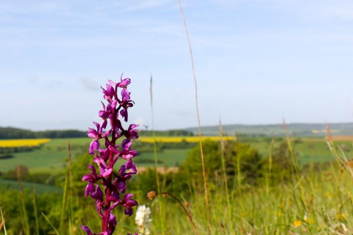 Orchideenwiese im Biosphärengebiet Bliesgau