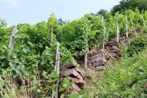 Weinterrassen zwischen Erlenbach und Klingenberg