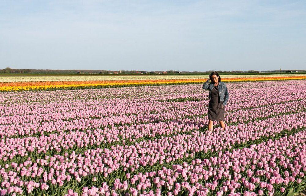 Tulpenroute Flevoland