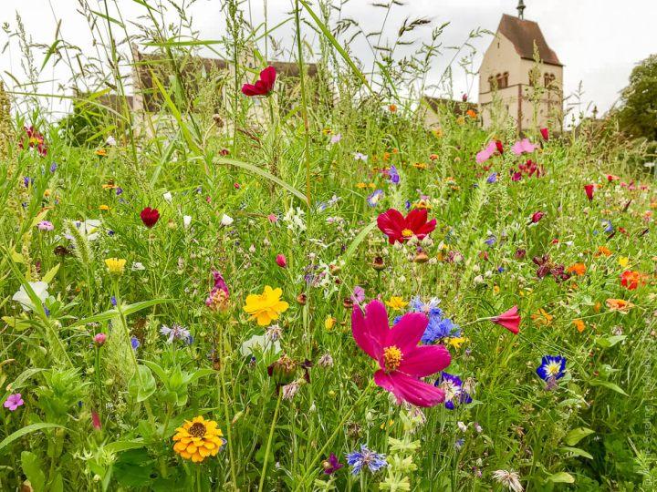 Blumenwiese vor der Kirche St. Peter und Paul auf der Insel Reichenau