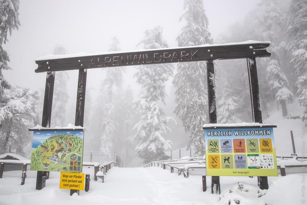 Alpenwildpark auf dem Pfänder
