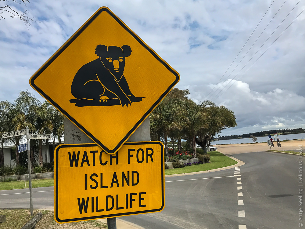 Koala Trail auf Raymond Island