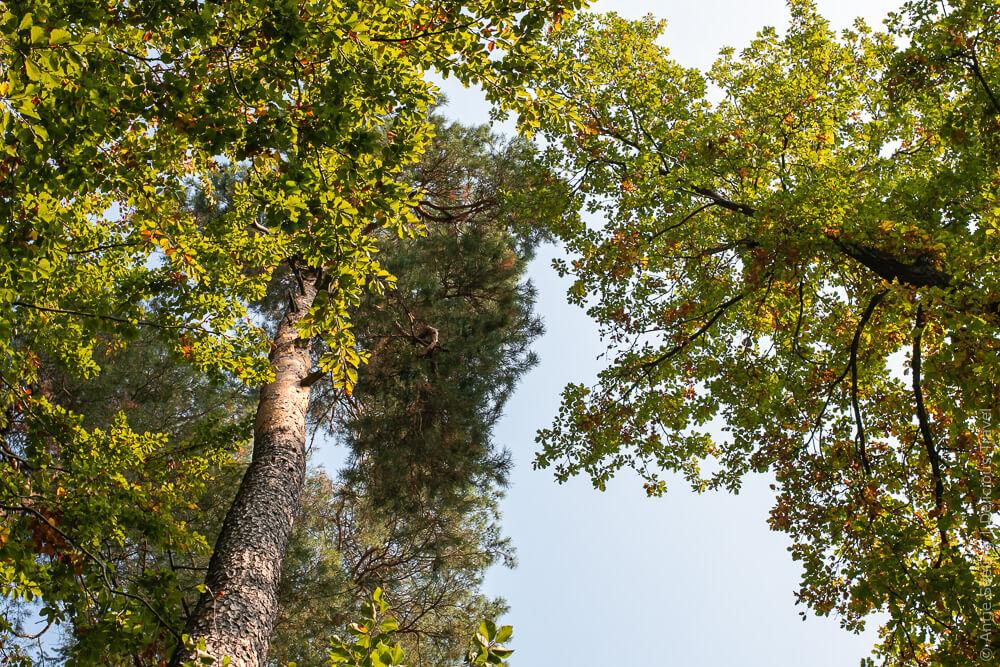 Perspektivwechsel: Blick in die Baumkronen