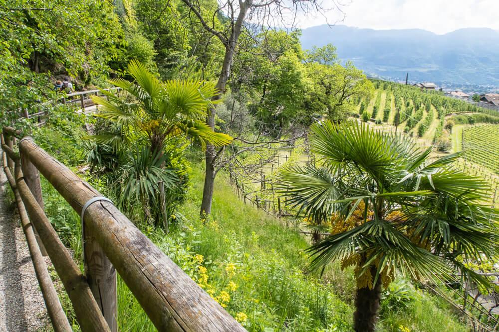 Palmen und Weinreben auf dem Algunder Waalweg
