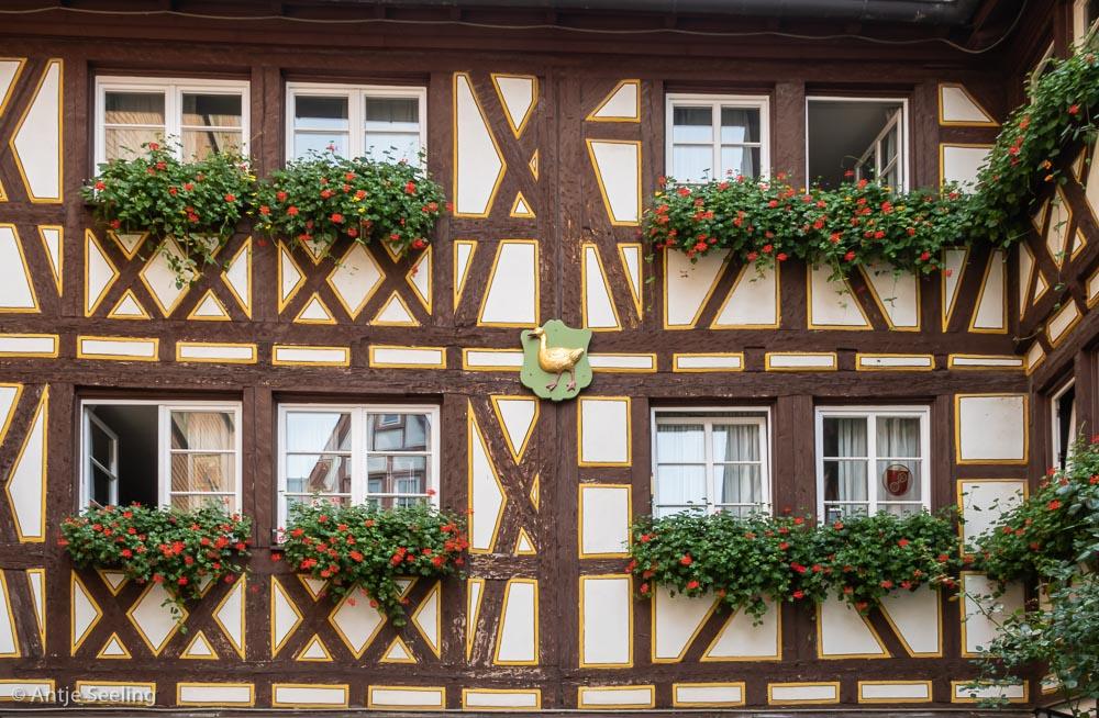 Mainz Goldene Gans