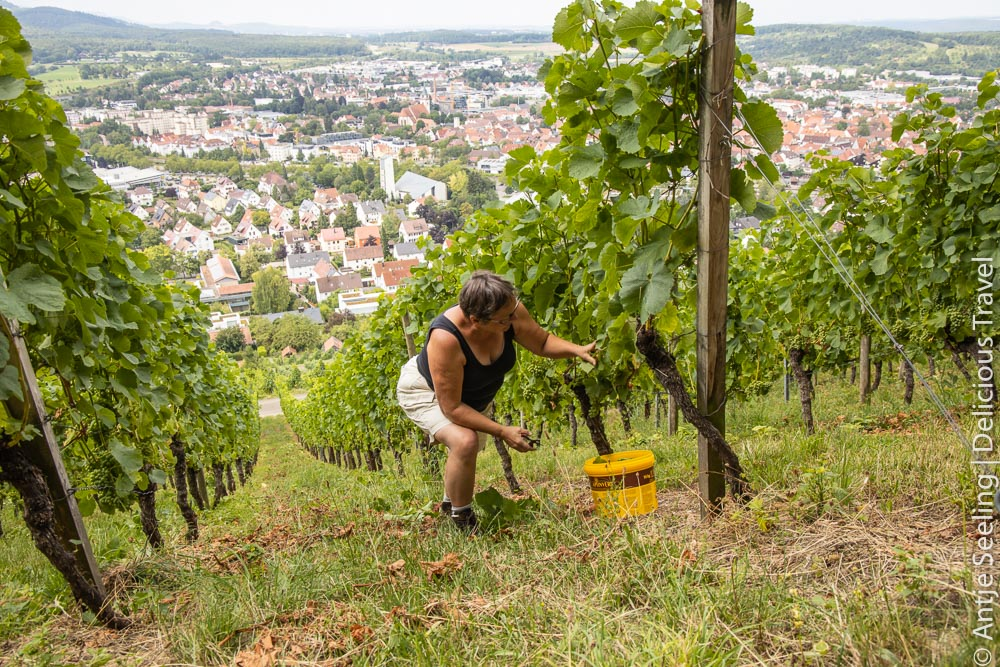 Weingärtnerin bei der Arbeit