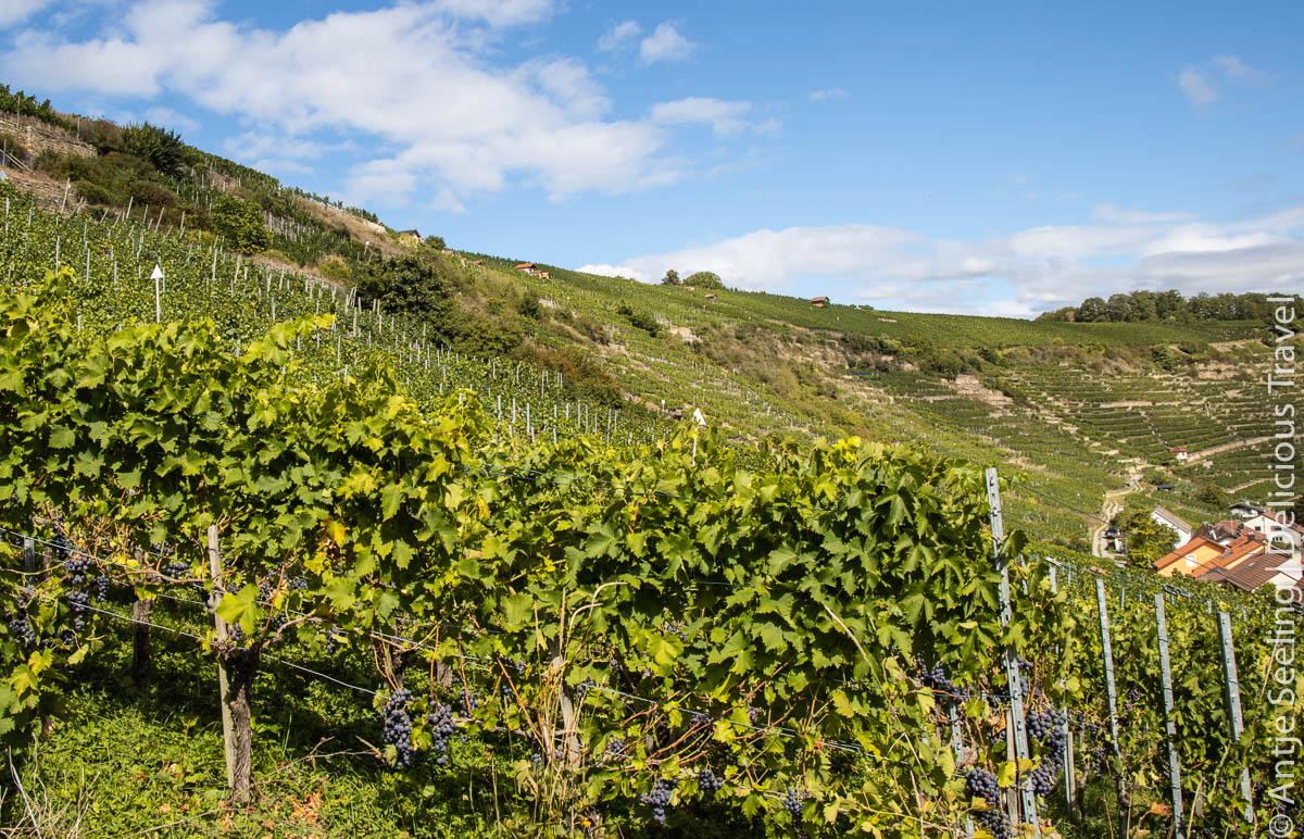 Weinlage Roßwager Halde
