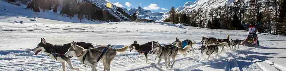 Grande Odyssée Savoie Mont Blanc, Rémy Coste vainqueur