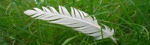 La plume ou la légèreté des mots
