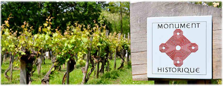 Appellation Saint-Mont, vignoble en fête 24,25,26 mars 2017