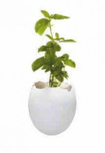 famille-Hema-poussin-paques-plante