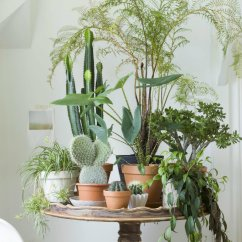 Living Room Decor With Plants Black White And Cream Ideas Inspiring