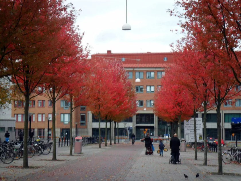 rot-blättrige-bäume-in-göteburg