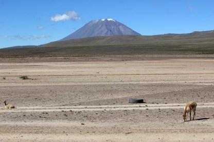 Vulkan Misti Arequipa
