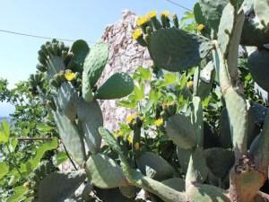flora-albanien