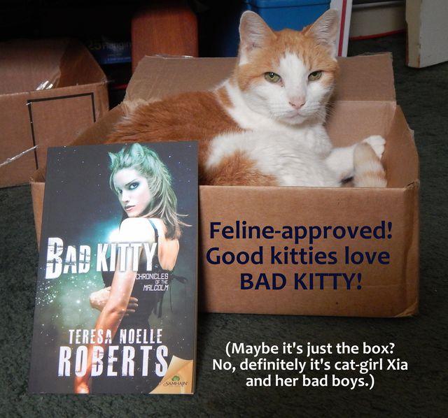 tnrgood kitty bad kitty meme