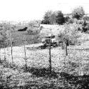Tiger's Country/ Carri Armati Tigre Nell'Empolese Valdelsa Nel 1944 – Di Claudio Biscarini