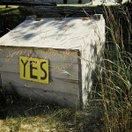 Finding Your Yes (Before You Say No)