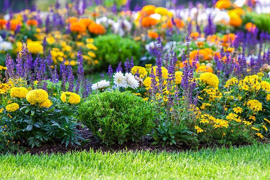 Giardini allinglese  Dellavalle Giardini