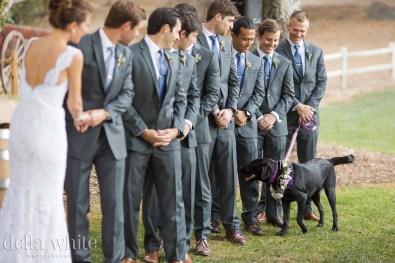 all eyes on the flower girl dog