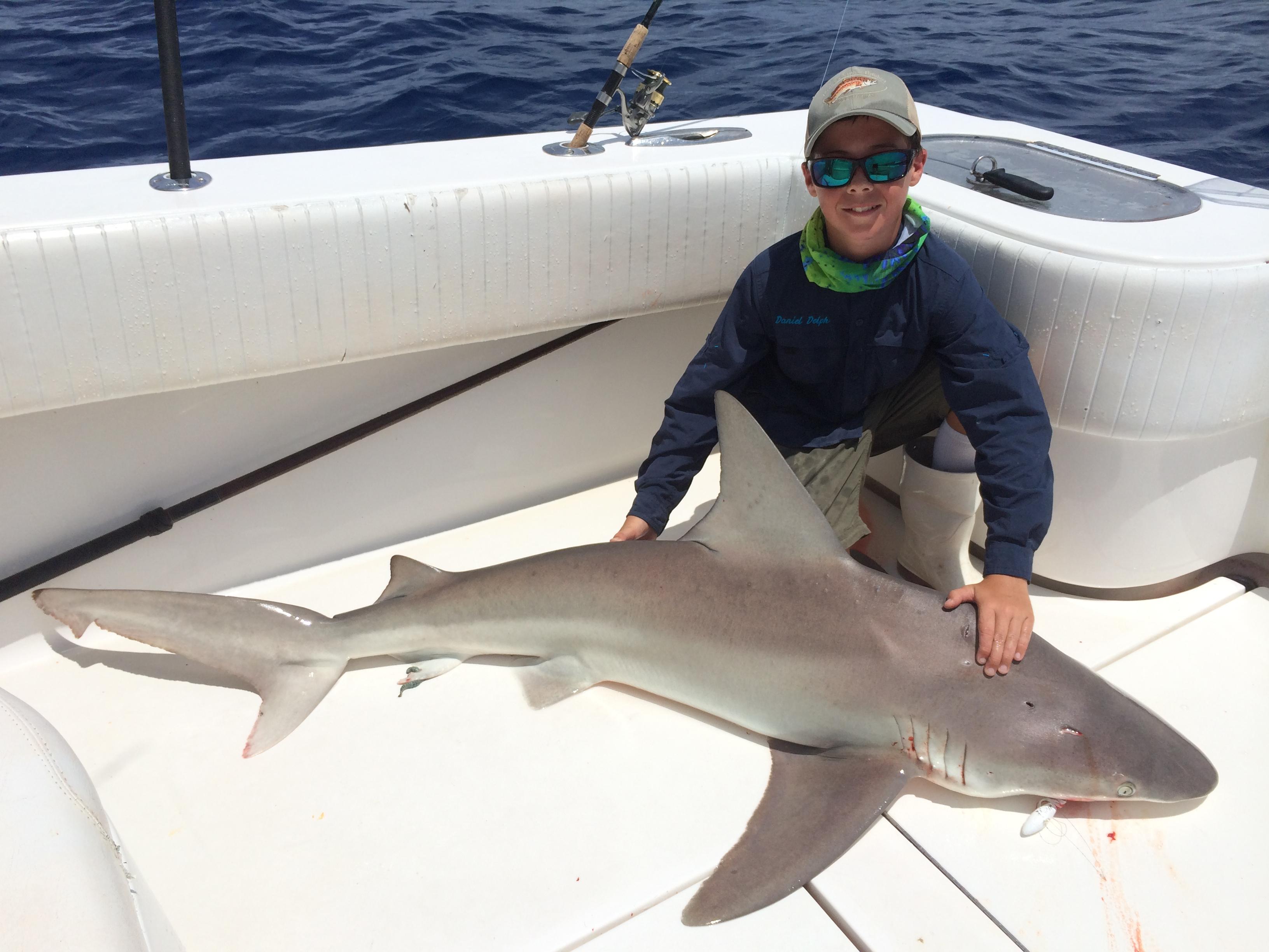 ловля акулы картинки сделать