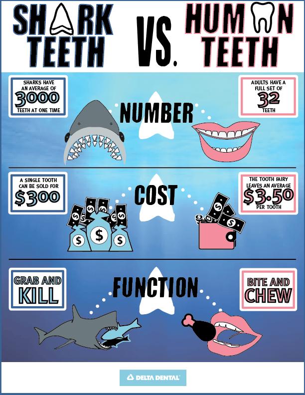 Shark Week Infographic V3-01