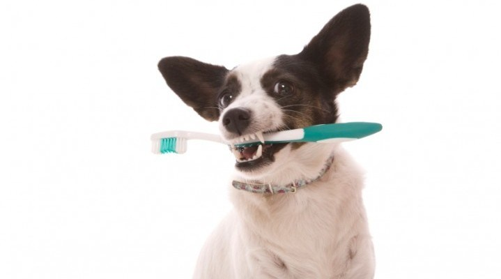 Doggie Dental Health: Infographic