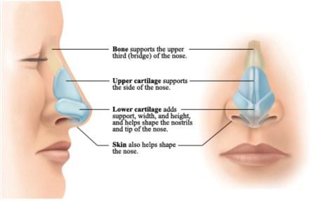 Anatomy of A Rhinoplasty