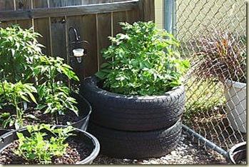 growing-potatoes-in-tires_Full