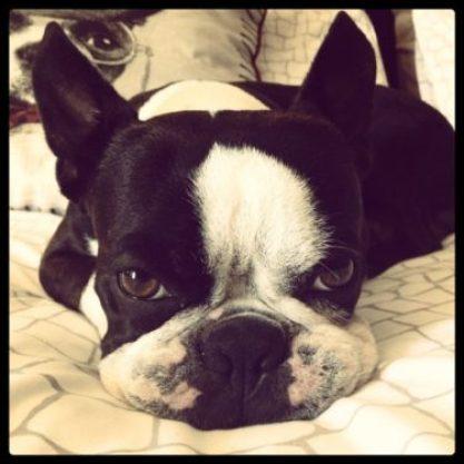 rebel on bed