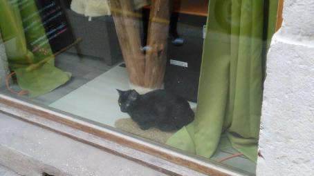 Un chat en vitrine.