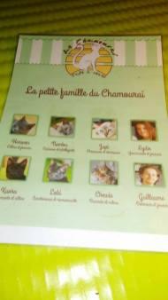 Les différents chats du Chamouraï