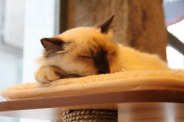 Pas de stress pour ce chat !