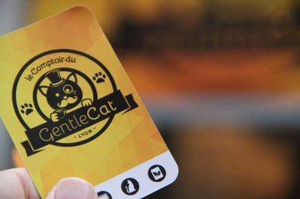 Le Gentlecat est le 2e bar à chats à ouvrir à Lyon.