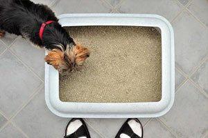pipi pad pour la proprete de votre chien