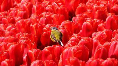 Photo of De natuur van de polder door de lens van Leen Kuiper