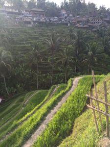 Terraced rice paddies at Tegalalang