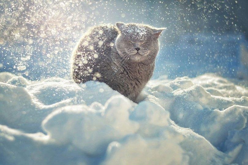 animals in winter 18 - 19 lindas fotografias de animais selvagens durante o inverno