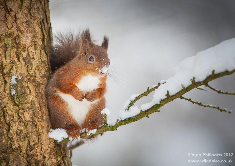 animals in winter 6 - 19 lindas fotografias de animais selvagens durante o inverno