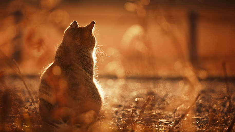 Beautiful Fall Wallpaper Desktop Sunny And Intimate Feline Photography By Seiji Mamiya