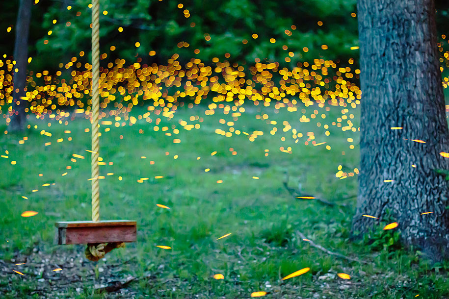 Magical LongExposure Firefly Pictures By Vincent Brady