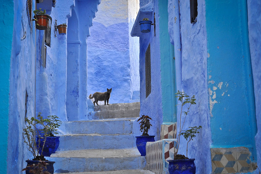 https://i0.wp.com/www.demilked.com/magazine/wp-content/uploads/2014/06/blue-town-walls-chefchaouen-morocco-2.jpg