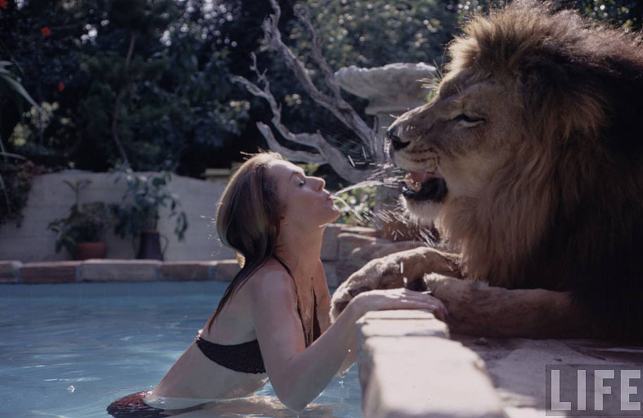 roar-lion-neil-film-photography-michael-rougier-10