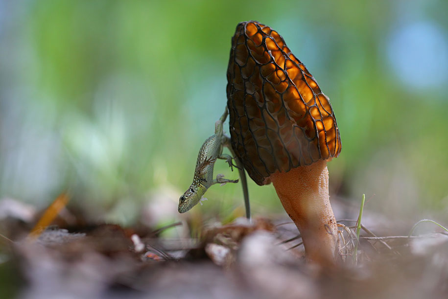 The Mysterious Life of Bugs and Snails By Vadim Trunov