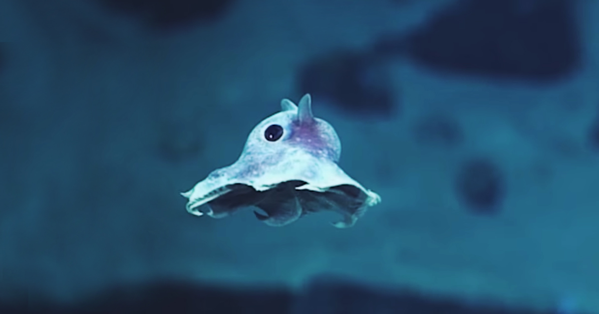 Cute Wallpapers Of All Kind Of Animals Weird Newly Discovered Sea Creatures Captured On Camera
