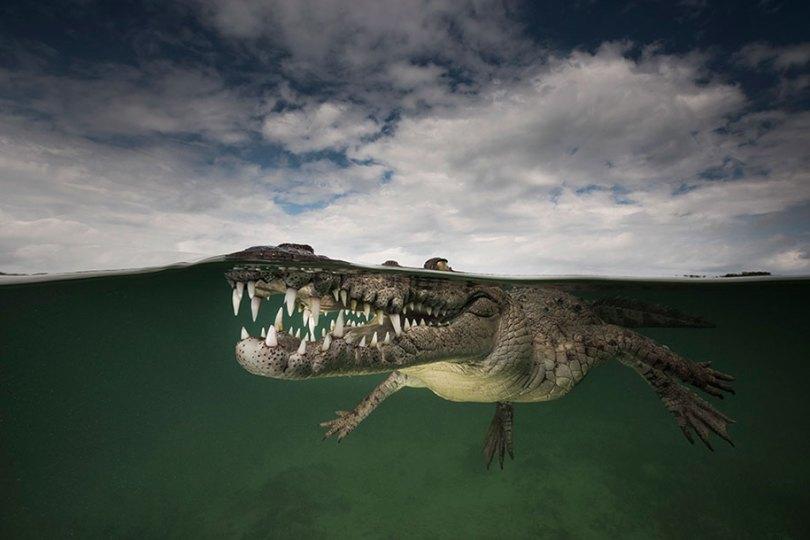 surface half underwater photography over under matty smith 15 - Fotografias espetaculares subaquáticas de Matty Smith