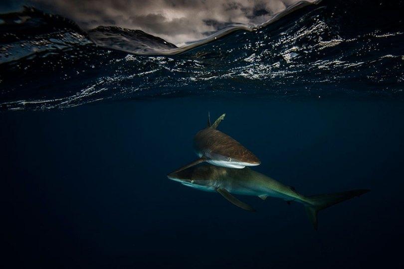 surface half underwater photography over under matty smith 16 - Fotografias espetaculares subaquáticas de Matty Smith