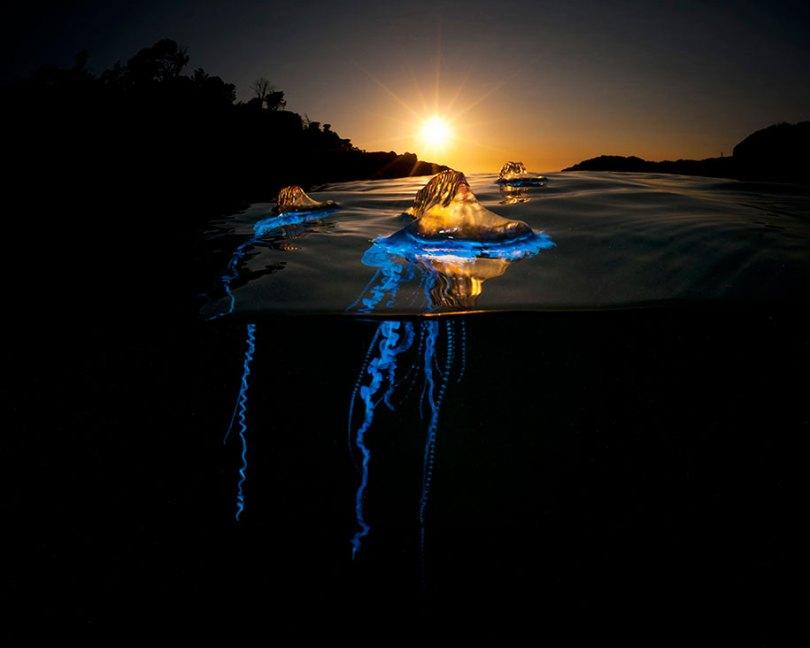 Superfície-metade-subaquática-fotografia-sobre-under-matty-smith-4